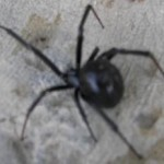 Home and Garden Pest Control Methods