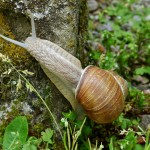 5 How-To Tips to Help You Keep Snails Out of the Garden Naturally